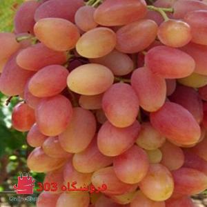 نهال انگور فخری قرمز
