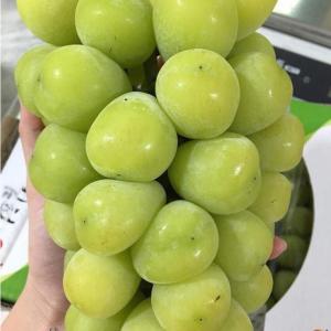 خرید نهال انگور موسکات