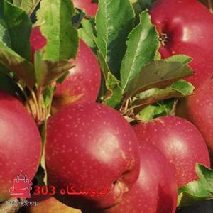 نهال سیب استارکینگ فرانسه