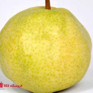 نهال گلابی سیبری