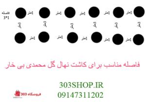 آموزش کاشت نهال گل محمدی بی خار
